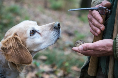 Truffle Hunting in Piemonte (Copyright: Christopher D. Allsop)